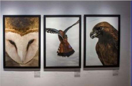 bold-birds